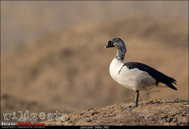 Bengalooru to Bharatpur - A solo birding trip!-bharatpur-165.jpg