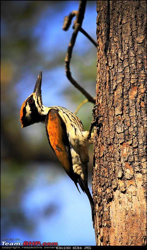 "Reflections on Wildlife Addictions ""Pench and Kanha National Park""-107.jpg"