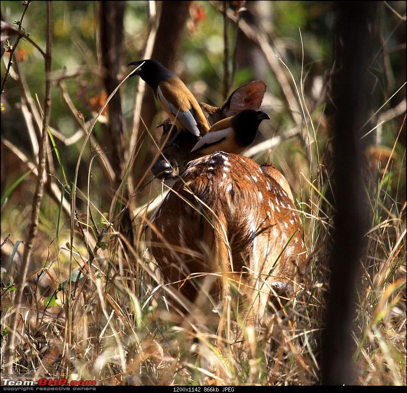 One Lucky Sunday At Ranthambhore- 24/03/12 Trip Report!!-4.jpg
