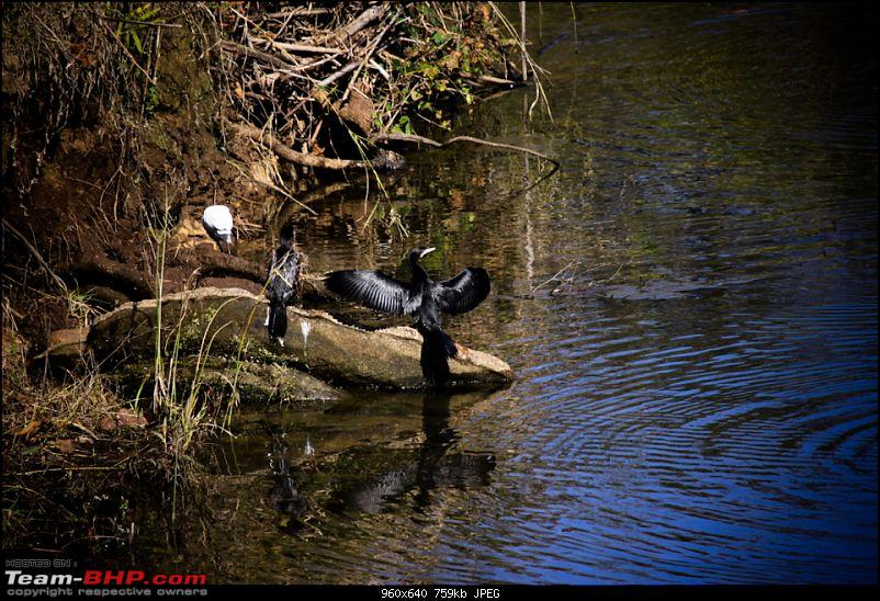 "Reflections on Wildlife Addictions ""Pench and Kanha National Park""-120.jpg"