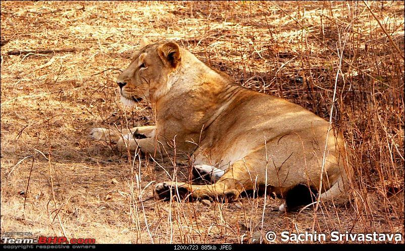 Visit to Gir forest - the only natural habitat for Asiatic Lion!-p1040758.jpg