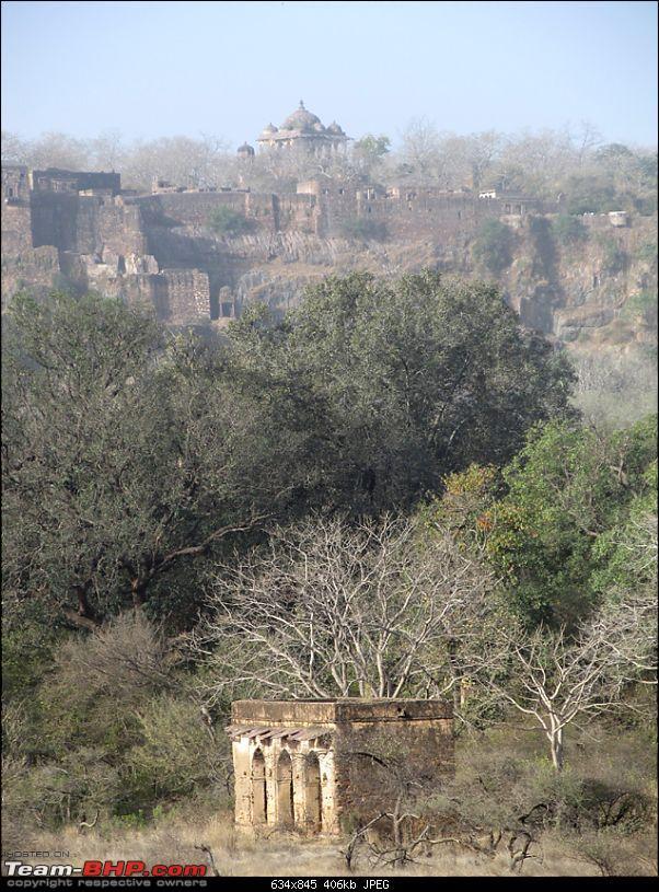 Ranthambore National Park: A Quick Travelogue-img_1117.jpg