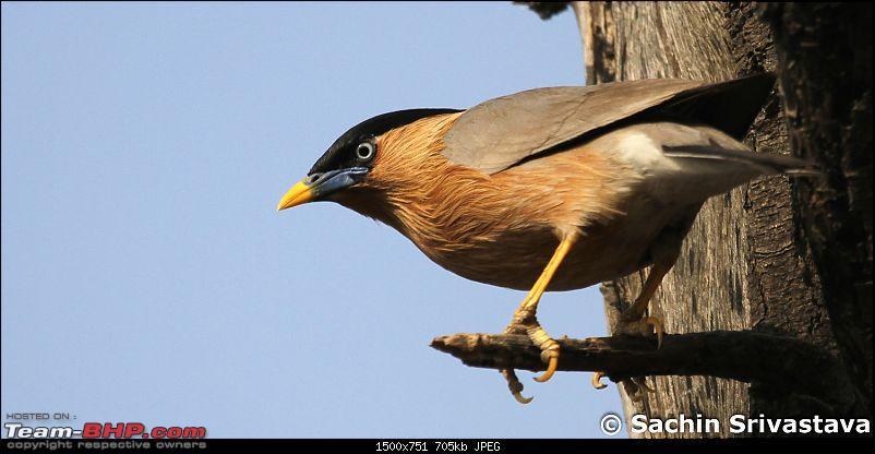 Trip to Keoladeo Ghana Bird Sanctuary Bharatpur-img_8835.jpg