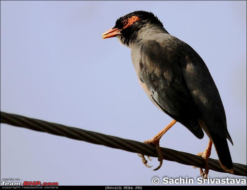 Trip to Keoladeo Ghana Bird Sanctuary Bharatpur-img_8949.jpg