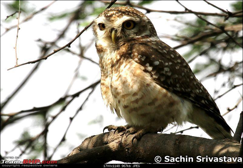 Trip to Keoladeo Ghana Bird Sanctuary Bharatpur-img_9113.jpg