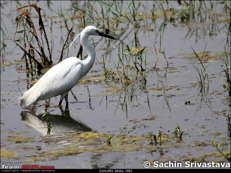 Trip to Keoladeo Ghana Bird Sanctuary Bharatpur-img_9315.jpg