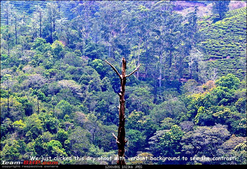 Fauji's Drivologues :- Beat the heat II - Escape to Sinnadorai's Bungalow in Valparai-dsc_1020001.jpg