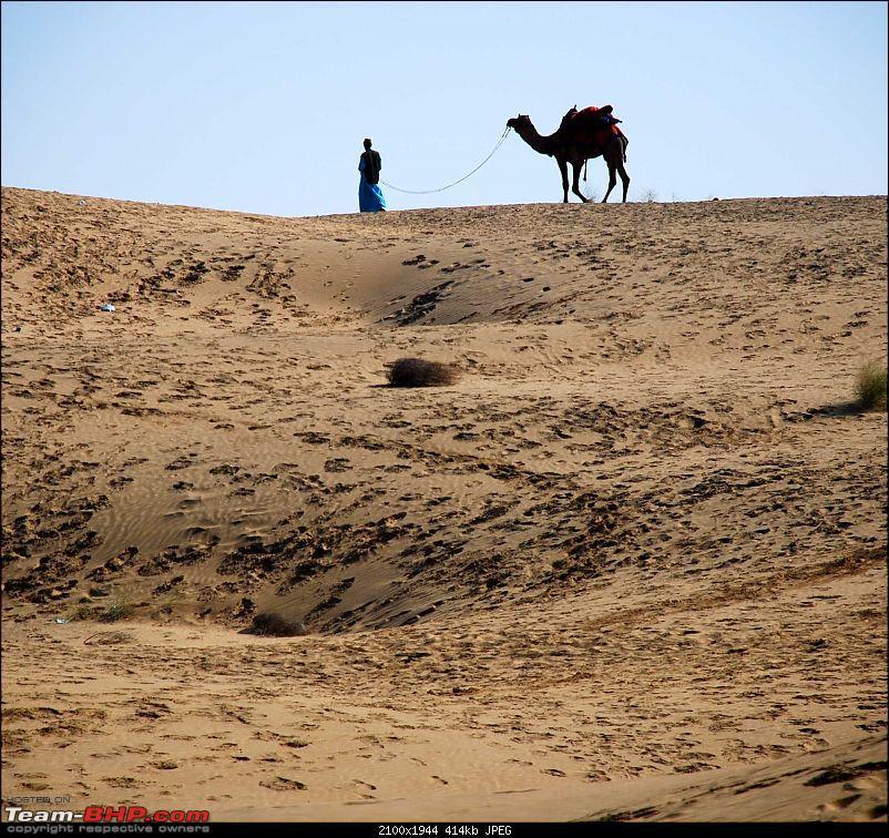Gurgaon - Jaisalmer - Jodhpur - Bikaner - Gurgaon-camels3.jpg