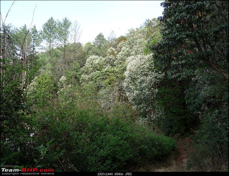 On the trail of the Mukteshwar man eater and her nemesis-dsc00273g.jpg
