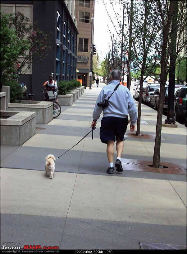 Travelogue - Summer in America-dog-man.jpg