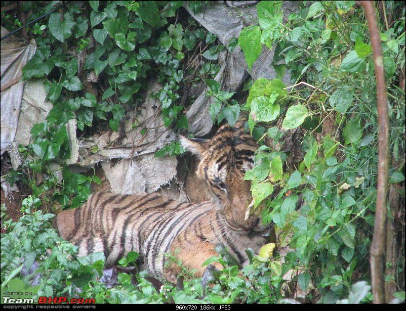 Fauji's Drivologues :- Beat the heat II - Escape to Sinnadorai's Bungalow in Valparai-3.jpg