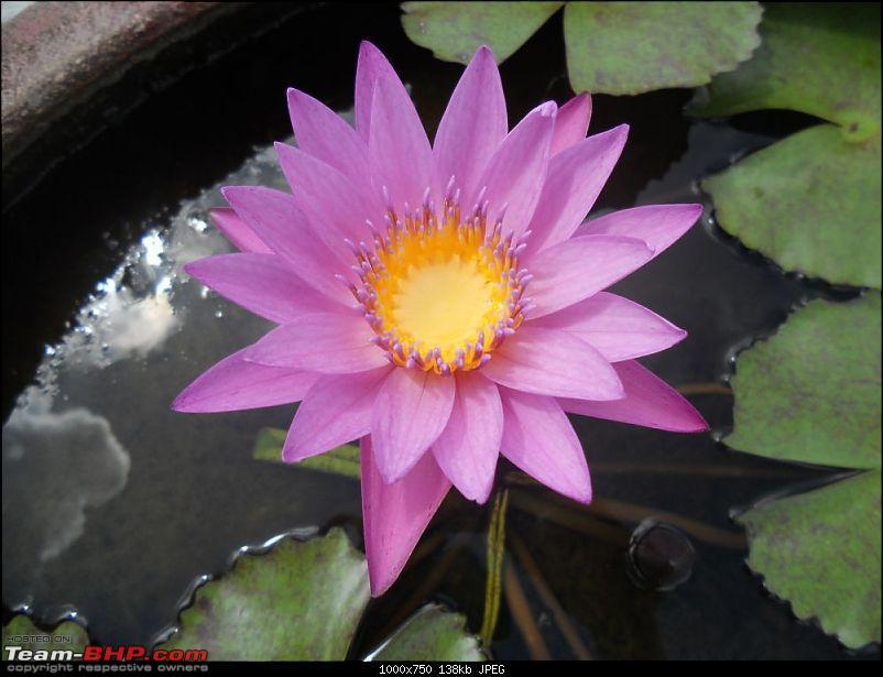 Amazing Thailand-dscn0313.jpg