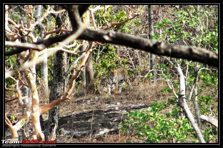 Name:  baghin nala female with grown cub query.jpg