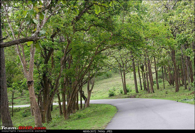 Weekend Trip to Ranganthittu, Mysore, Masinagudi & Shivanasamudra-bandipur-forests-green.jpg