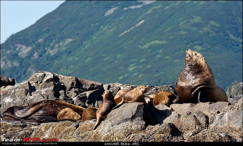 Bears, Volcanoes & what not, Far East Russia: Photologue-_a0r8185.jpg