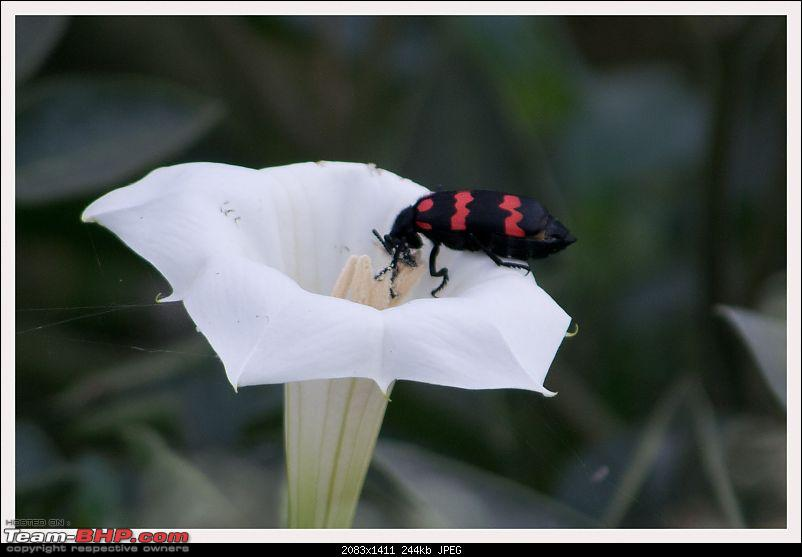A shutterbug experiences around chennai - Weekend getaways in chennai-bee.jpg