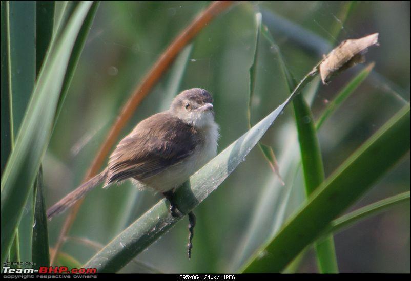 A shutterbug experiences around chennai - Weekend getaways in chennai-birding_021.jpg