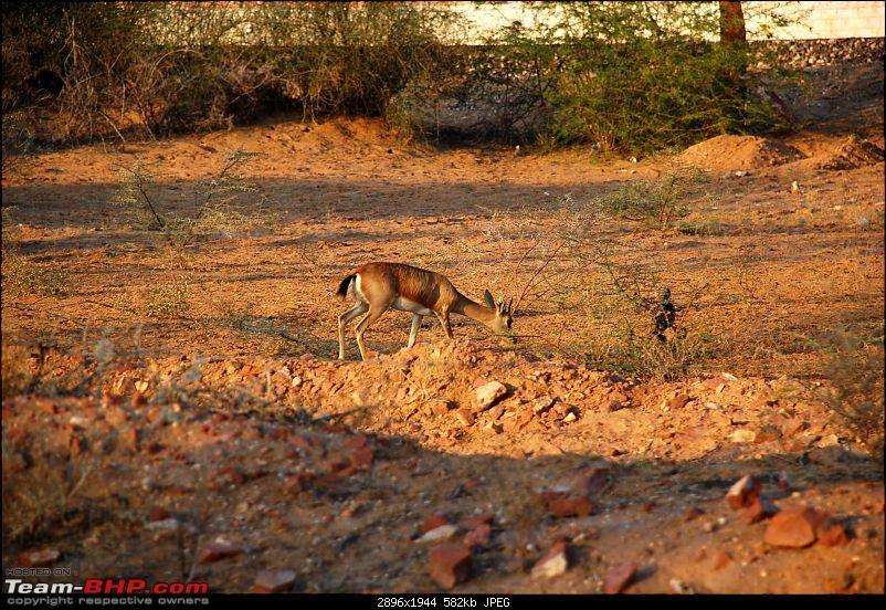 Gurgaon - Jaisalmer - Jodhpur - Bikaner - Gurgaon-deer1.jpg
