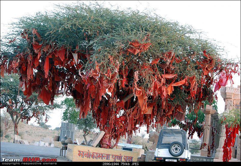 Gurgaon - Jaisalmer - Jodhpur - Bikaner - Gurgaon-wishtree.jpg