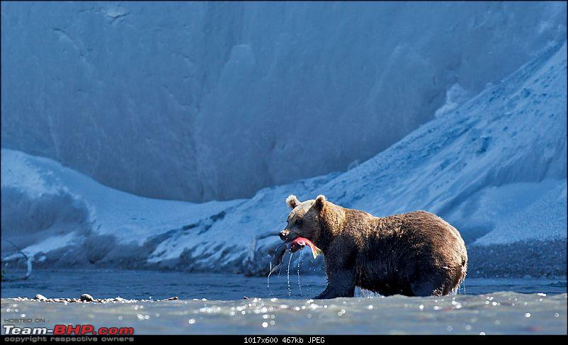 Bears, Volcanoes & what not, Far East Russia: Photologue-_a0r7324.jpg