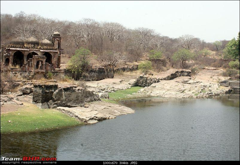Ranthambhore : Water Hole Animal Census, tigers, forts and more....-dsc09519.jpg