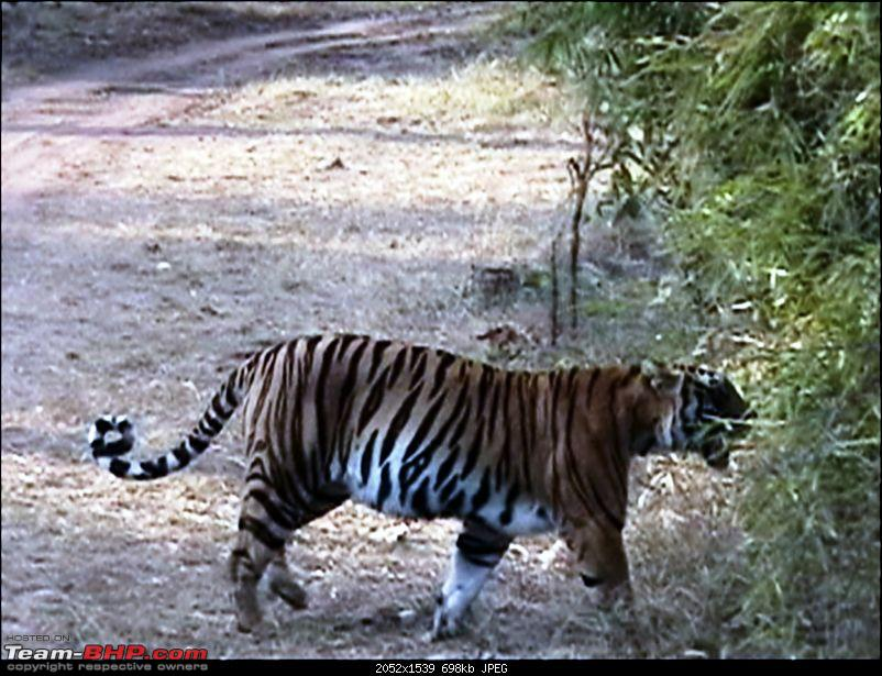 Kanha Jungle Safari- [Lucky this time]-1_25_2009-4_23-pm_00071.jpg