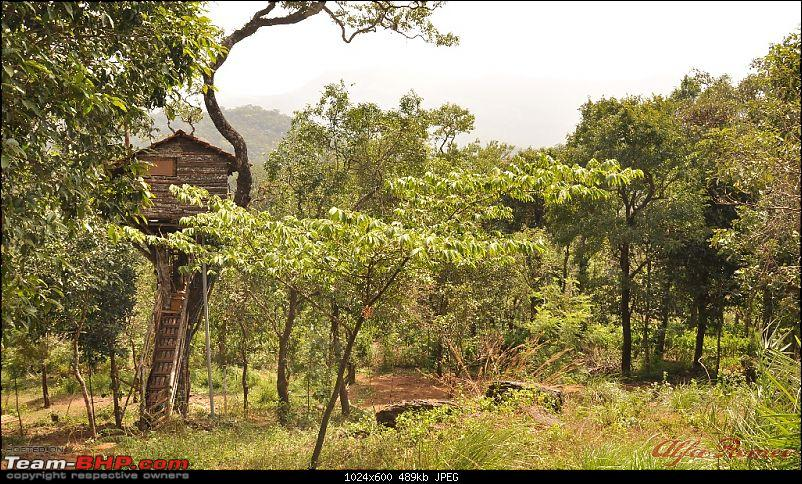 My drive to Coorg, the Scotland of India-dsc_0780.jpg
