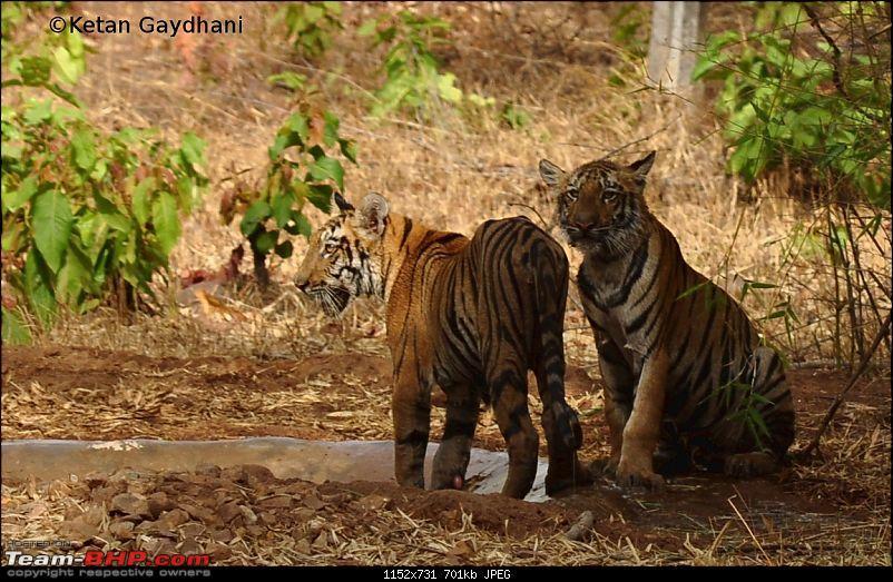 Tadoba Tiger Reserve visit - May 2012-0009.jpg