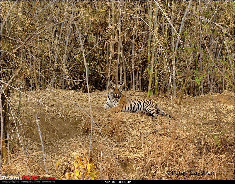 Tadoba Tiger Reserve visit - May 2012-0030.jpg