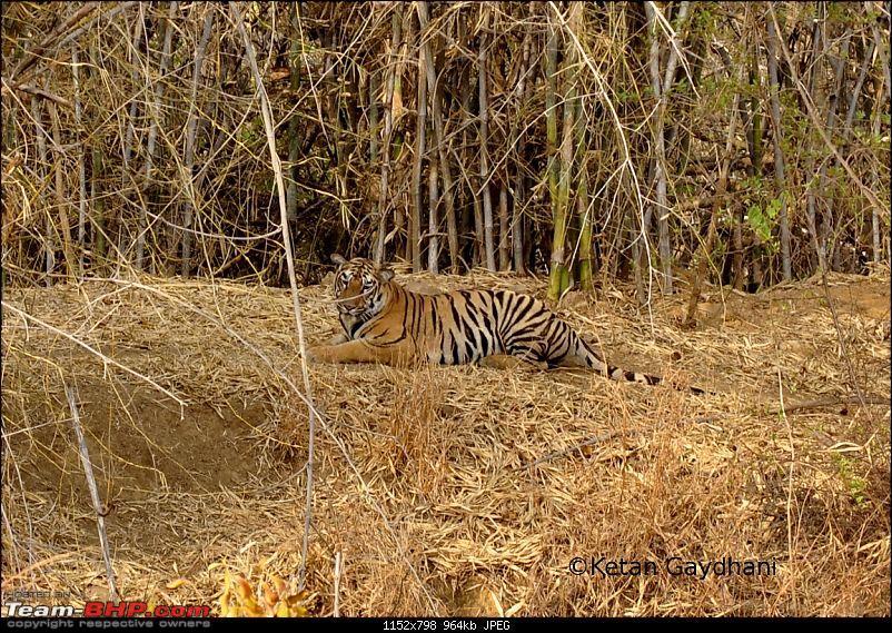 Tadoba Tiger Reserve visit - May 2012-0031.jpg