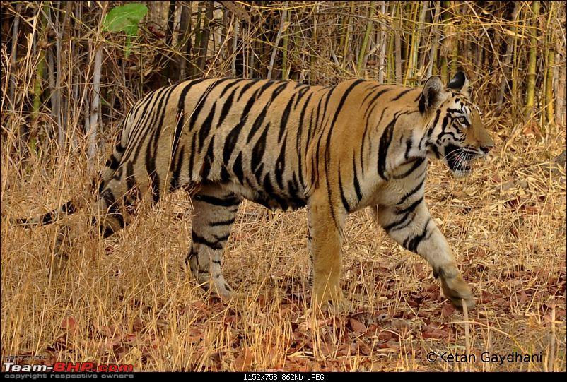 Tadoba Tiger Reserve visit - May 2012-0038.jpg