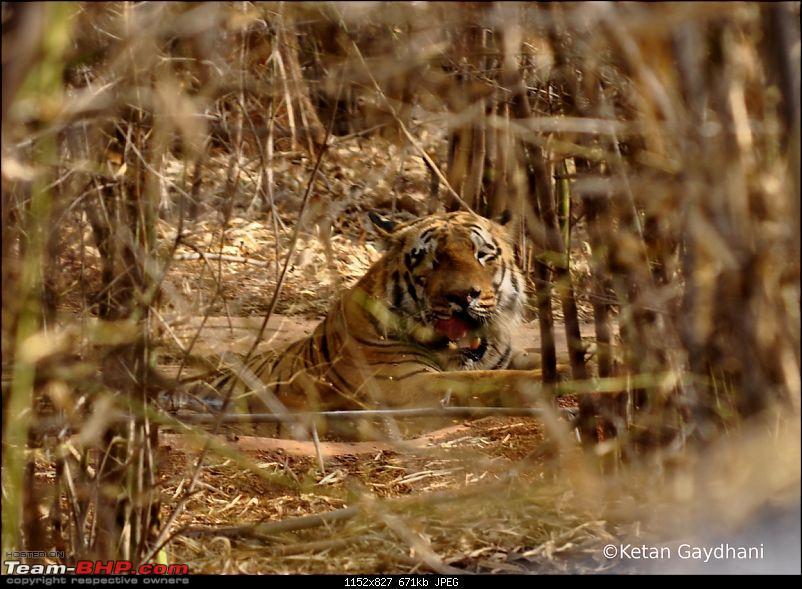 Tadoba Tiger Reserve visit - May 2012-0055.jpg