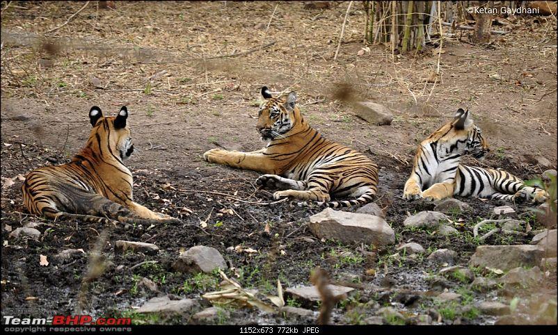 Tadoba Tiger Reserve visit - May 2012-0072.jpg