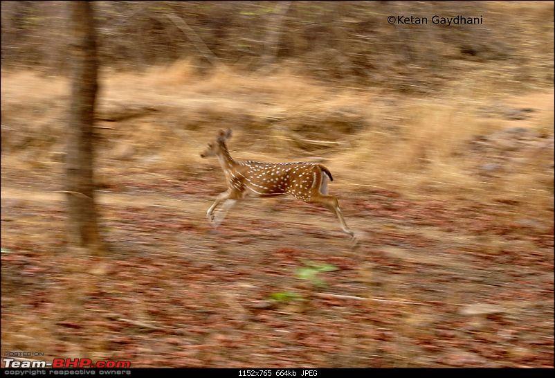 Tadoba Tiger Reserve visit - May 2012-0079.jpg