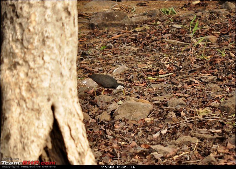 Tadoba Tiger Reserve visit - May 2012-0118.jpg