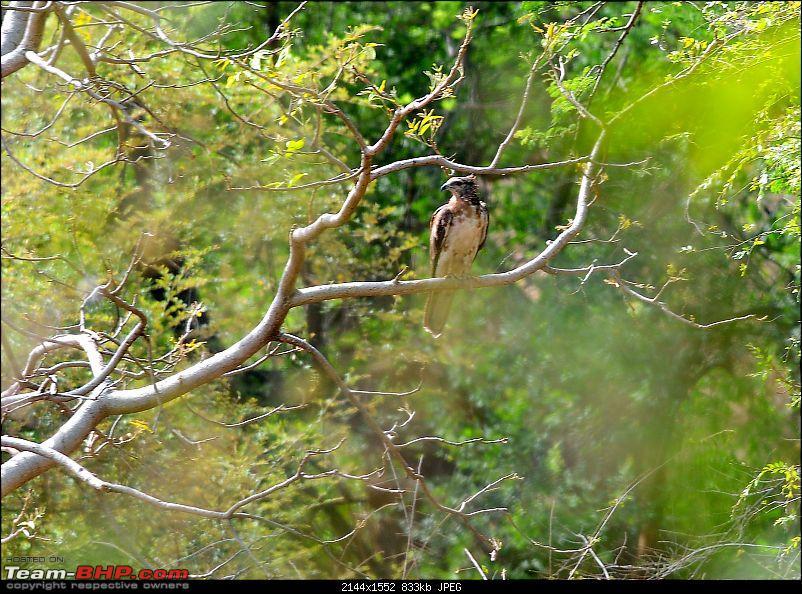 Gurgaon - Ranthambhore - Jodhpur - Gurgaon: Big Cats call again..!-6872.jpg
