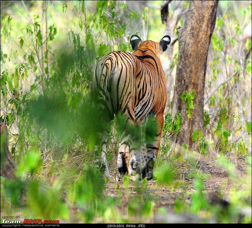 Gurgaon - Ranthambhore - Jodhpur - Gurgaon: Big Cats call again..!-6923.jpg