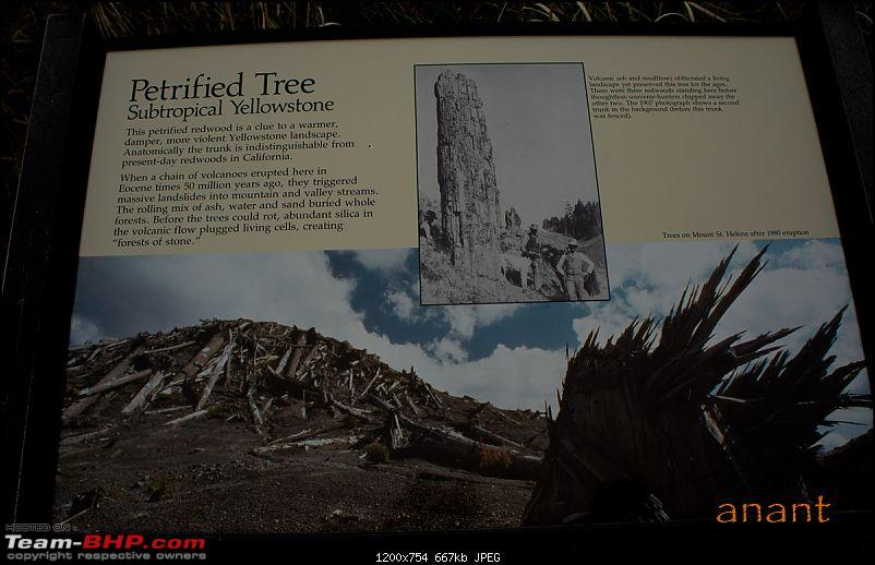 Yellowstone National Park : A Drive to Remember-dsc00469.jpg