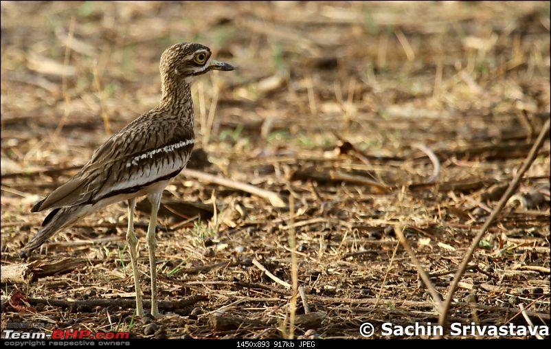 Jungles of MP: Pench National Park in May-img_1880.jpg
