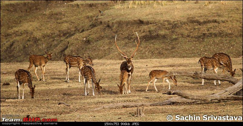 Jungles of MP: Pench National Park in May-img_1943.jpg