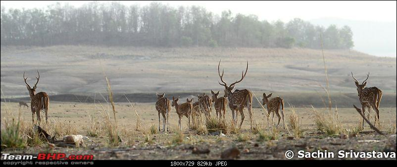 Jungles of MP: Pench National Park in May-img_2007.jpg