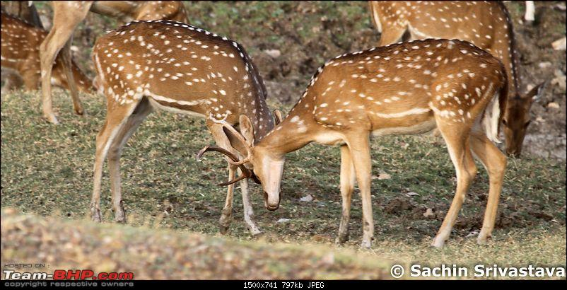 Jungles of MP: Pench National Park in May-img_2008.jpg