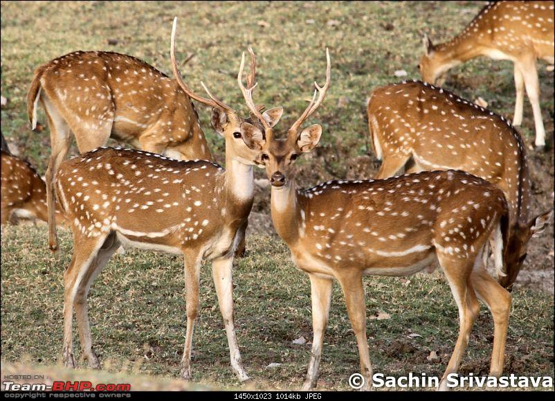 Jungles of MP: Pench National Park in May-img_2012.jpg