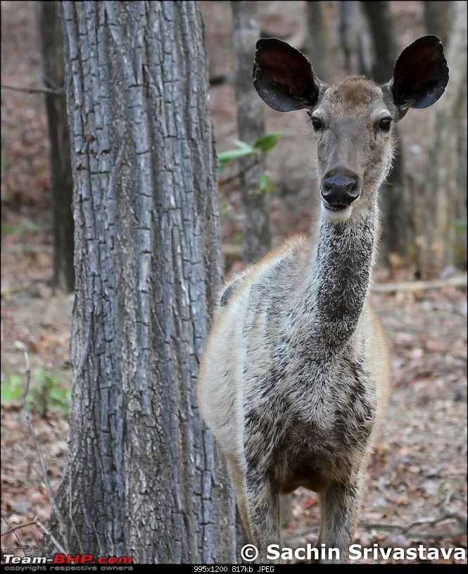 Jungles of MP: Pench National Park in May-img_2043.jpg