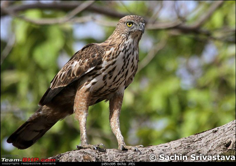 Jungles of MP: Pench National Park in May-img_2239.jpg