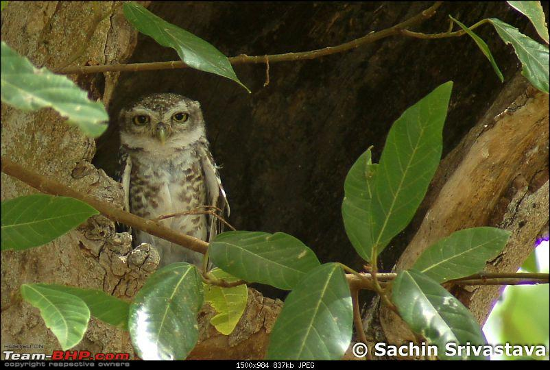 Jungles of MP: Pench National Park in May-dsc05752.jpg