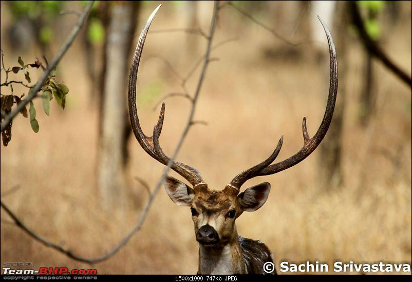 Jungles of MP: Pench National Park in May-img_2409.jpg
