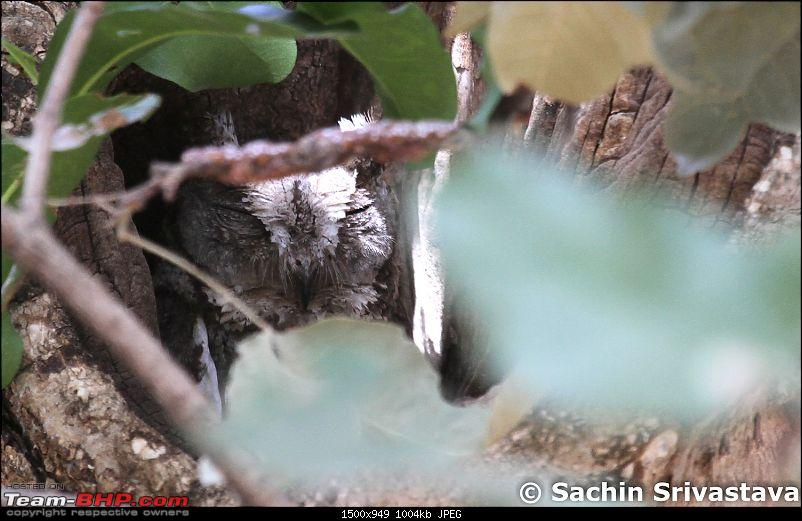 Jungles of MP: Pench National Park in May-img_2346.jpg