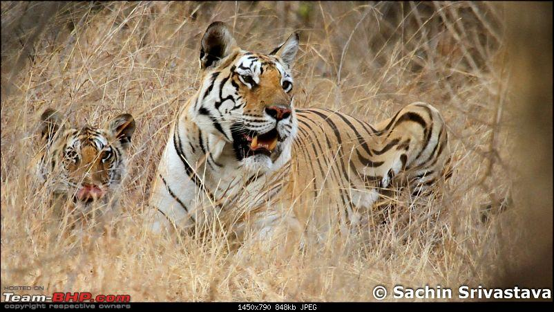 Jungles of MP: Pench National Park in May-img_2529.jpg