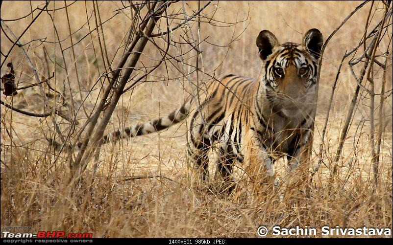 Jungles of MP: Pench National Park in May-img_2590.jpg